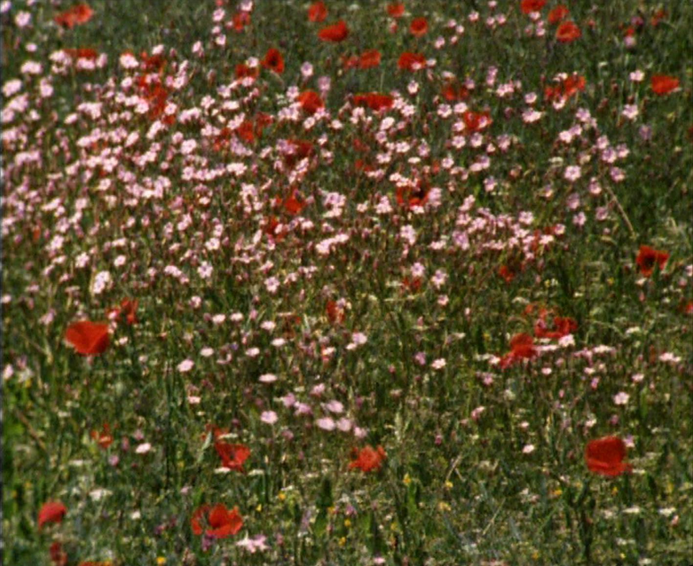 2021.01_RoseLowder_Film still 03_Bouquet2